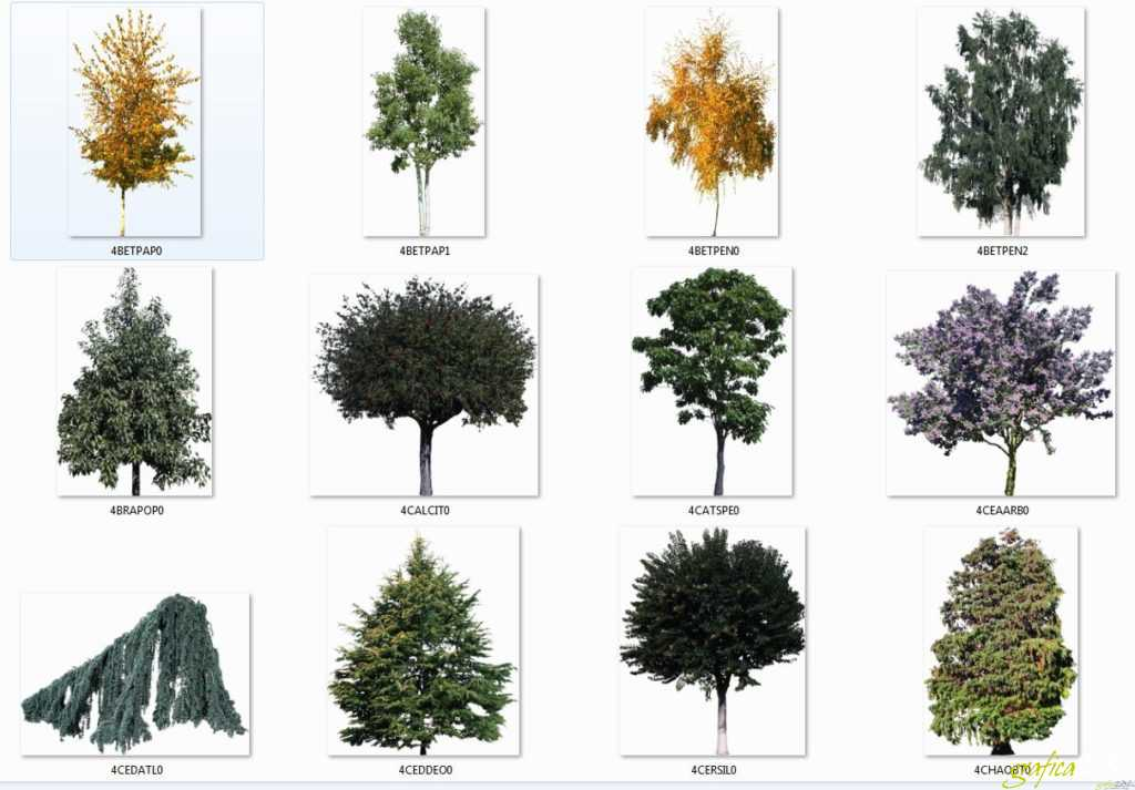 raccolta alberi scontornati 02