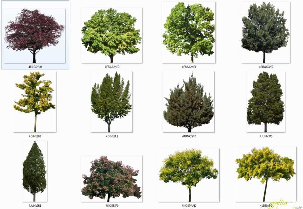 Alberi scontornati - Cut tree photoshop