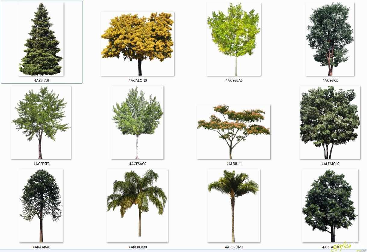 Raccolta 12 alberi scontornati 01